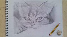 Mi dibujo de un gato.✏ツ♡