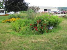 Commercial rain garden, year 2. Rain Garden, Year 2, Commercial, Gardens, Building, Plants, Outdoor Gardens, Buildings, Plant