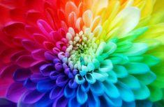 fiore, arcobaleno, colori,