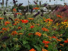 ADAM WOODRUFF + ASSOCIATES - Gardens at the Bank of Springfield