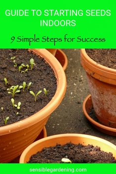 9 simple steps for success. Get a head start on your garden and save money. How to do it the right way and enjoy creating your own bedding plants. Grow flowers, herbs and vegetables.