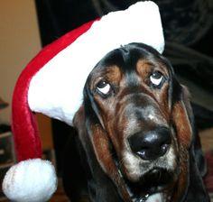 Last Christmas!! Bailey Boy:)