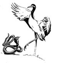 Tai Chi Crane and Snake