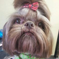 Shelby's Pet Styles : Dog Groomer - Dog Grooming - Cat Groomer - Cat Grooming - Pet Groomer - Pet Grooming Oklahoma, Oklahoma City, Edmond, Nichols Hills