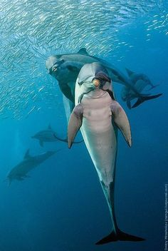 Playful Dolphins #nature, Click to Enlarge