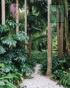 Tropical garden Ideas, tips and photos. Inspiration for your tropical landscaping. Tropical landscape plants, garden ideas and plans. Balinese Garden, Bali Garden, Garden Oasis, Dream Garden, Tropical Garden Design, Tropical Landscaping, Tropical Plants, Garden Landscaping, Tropical Gardens