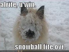 alrite, u win. snowball fite ovr.