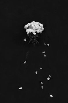 Flowers Photography Black And White Roses 25 Trendy Ideas Black Background Wallpaper, Dark Wallpaper, Wallpaper Iphone Cute, Flower Wallpaper, Cute Wallpapers, Black Backgrounds, Black And White Roses, Black And White Aesthetic, Dark Photography