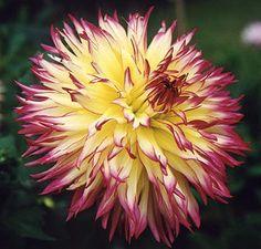 Special Flowers, Beautiful Roses, Flower Power, Bouquets, Backyard, Plants, Garden, Exotic Flowers, Beautiful Flowers