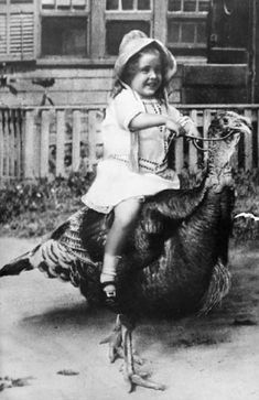 I didn't know you could ride turkeys!  I obviously know this isn't a chicken but it is an awesome picture.