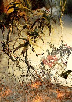 Rebecca Jones, landscape
