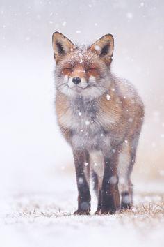 Ooo, I love the first snowfall.....