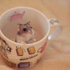 This little hamster loves tea time too!
