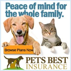 FREE Pet Insurance Reviews and Quotes! Pet Insurance Reviews, Best Pet Insurance, Cool Pets, Peace Of Mind, Winnie The Pooh, Disney Characters, Fictional Characters, Quotes, Free