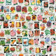 Garden Party - Boråstapeter Murals - A fun, quirky wall mural made up of images of various brightly coloured seed packets from vintage American seed stores.
