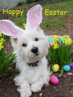 Happy estern dogs | BB Code for forums: [url=http://www.imagesbuddy.com/happy-easter-dog ...