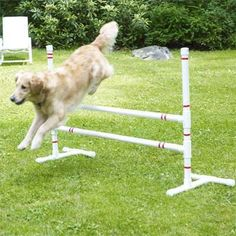Build your pet an agility course that includes jump bars, teeter-totter and weave polls with our easy-to-follow plans.    Photo: Wendell T. Webber   thisoldhouse.com