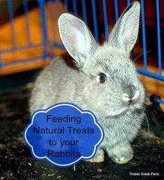 bunny treats