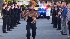 Polizeihund Hunter an Krebs erkrankt - So emotional verabschieden sich US-Polizisten - News Ausland - Bild.de
