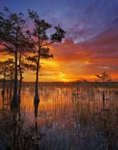 Help us celebrate World Wetlands Day! Among the world's most productive environments, wetlands are critically important to freshwater supply, biodiversity, flood control and food production. They're also places of stunning natural beauty. Photo from the Pa-hay-okee overlook at Everglades National Park in Florida courtesy of Paul Marcellini. — with Paul Marcellini Photography at Everglades National Park.