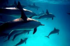 Scuba Diving with Dolphins in Puerto Rico