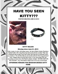 LP MantleYYC Pet Recovery June 27   Kitty is still missing  From the Mackenzie Area