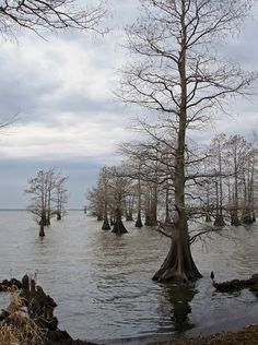 Lake Caddo ~ the only natural lake in Texas  (Photo by Andy New)