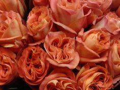 #Rose #Wildspirit Available at www.barendsen.nl