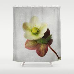 Vintage Helleborus  - JUSTART © Shower Curtain by JUSTART - $68.00 #justart #society6 #showercurtain #bathroom #floral #flower #helleborus #christmasrose #pink #white #yellow #green #red #grey #texture #home #decor