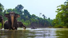tangkahan, north sumatera, indonesia.