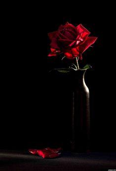 nowe tapety Black Roses 1340x1975 do pobrania