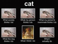 LOLcats is the best place to find and submit funny cat memes and other silly cat materials to share with the world. We find the funny cats that make you LOL so that you don't have to. I Love Cats, Cute Cats, Funny Cats, Funny Animals, Cute Animals, Silly Cats, Animal Funnies, Animal Jokes, Crazy Cat Lady
