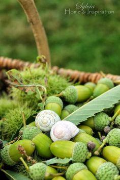 acorns*