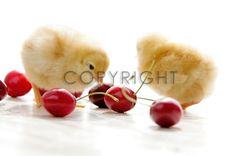 Bild auf Türfolie kaufen im FineArtPrint Shop 11515861 Riedel Tanja art aviana beautiful beauty design einrichtung essen food frisch frische frucht fru