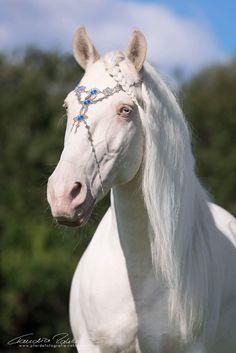 cheval blanc feeric ♘