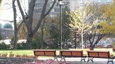 Le square réaménagé. Four Square, City, Plants, Cities, Planters, Plant, Planting