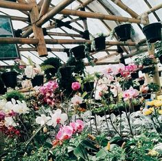 """Orchid. Elegant, beautiful, and highclass"""