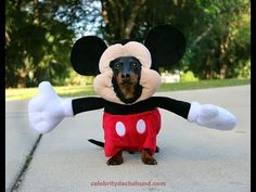 Dog Dressed as Mickey Mouse! - YouTube