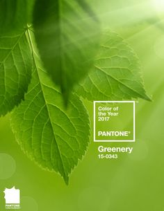 Sharing Pantone's Color of the year 2017, Greenery! Stop by for a look at this refreshing color.