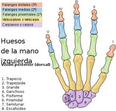 Rehabilitación en las fracturas de mano