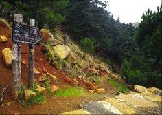 La Sierra de la Nieves (Málaga) El pinsapo es uno de sus más reconocidos habitantes. Endemismo de la Sierra de las Nieves, se trata de una reliquia biológica de esta Reserva de la Biosfera que bien merece planificar una excursión.