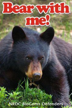 Bear With Me! NRDC BioGems Defenders.