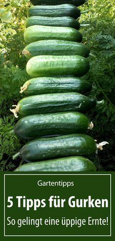 Garden Tool Storage, Garden Tools, Hydroponic Gardening, Gardening Tips, Indoor Garden, Outdoor Gardens, Hydrangea Care, Organic Fertilizer, Engagement Ring Cuts