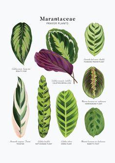 Planting Succulents, Garden Plants, Planting Flowers, Inside Plants, Cool Plants, House Plants Decor, Plant Decor, Exotic Plants, Tropical Plants