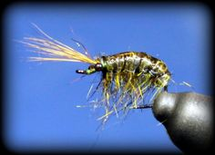 A great looking Scud tying tutorial!