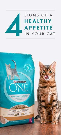 Is Not Eating A Sign Of Uti In Cat