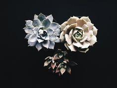 Succulents.  | Sara Kowalski MacLellan | VSCO Grid
