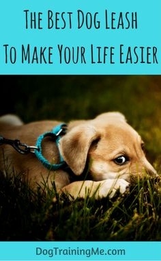 We'll help you find the best dog leash for training and walking your dog. We cover the different types of dog leashes and their benefits and give you a dog leash buyer's guide to help you choose the right one. Read it all now.
