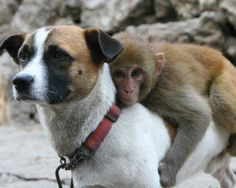 """Opposites attract  Here's an adorable look at the most unlikely of friends — from inseparable interspecies pals to surprising bonds between predator and prey — that will leave you wondering, """"Why can't we all just get along?"""""""