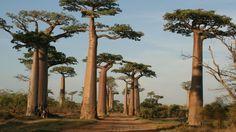 Madagascar;